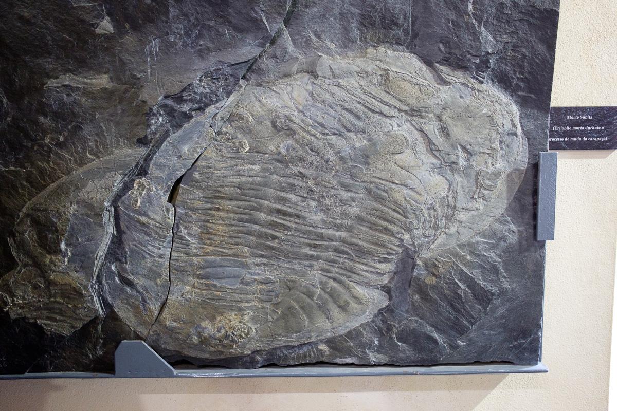 Giant trilobites in Canelas museum
