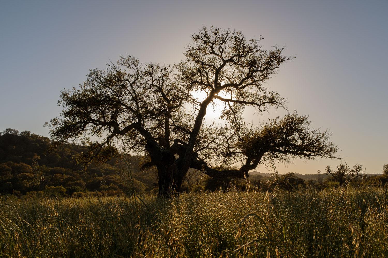 Silhouette near Odemira